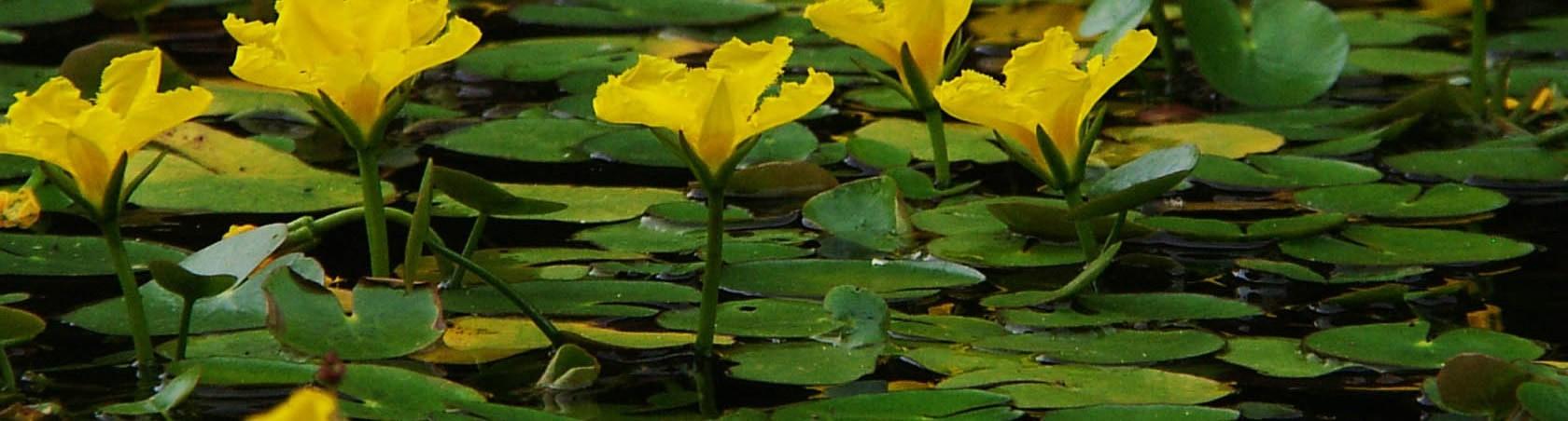 water-gardens